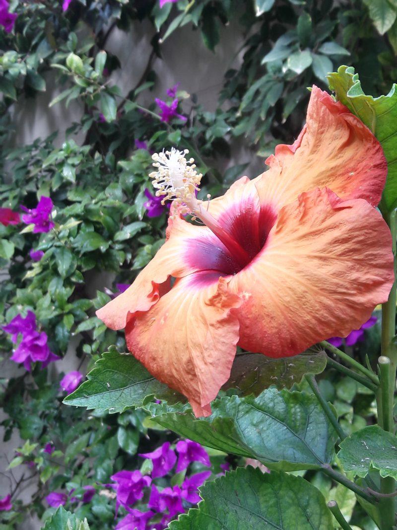 Native Flowers San Miguel de Allende Mexico live like local
