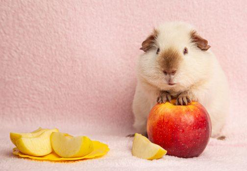 Part-time Natural Pet Food Store Associate – San Diego, CA