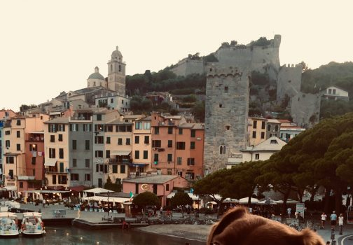 Full-time Solo Travel as an International Pet Sitter – What's THAT like?