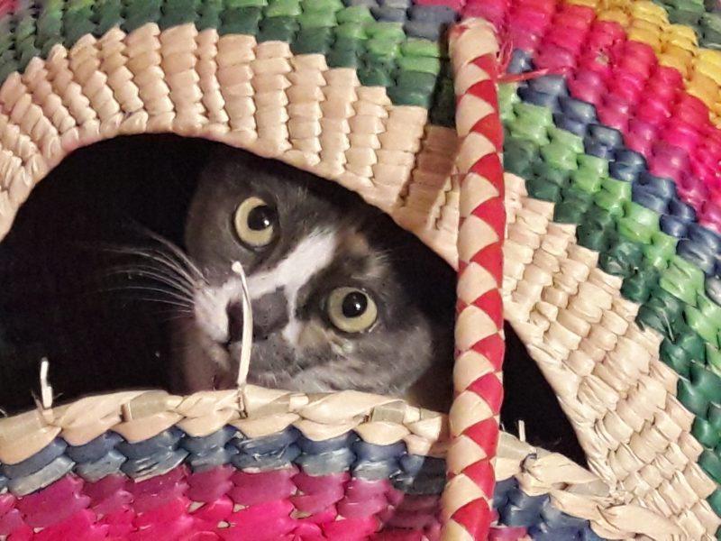 cats dogs pets animals unesco heritage city san miguel de allende mexico live like a local