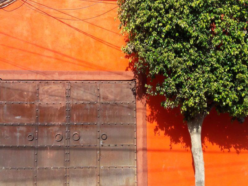 walle native trees foliage plants colors textures San Miguel de Allende Mexico live like local